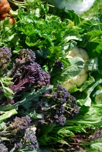 Lovely spring veg Cauliflowers and purple sprouting broccoli